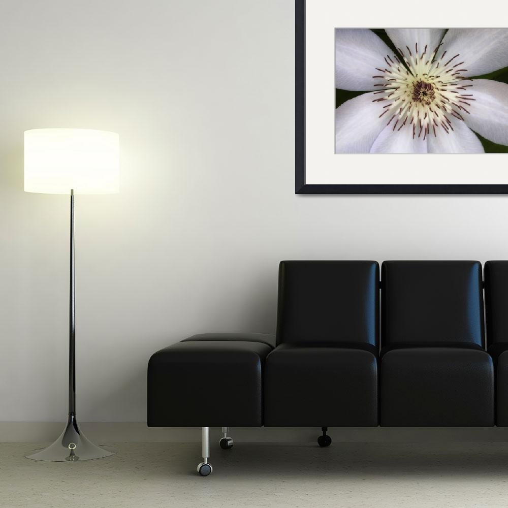 """White Clematis Flower&quot  (2014) by SoulfulPhotos"