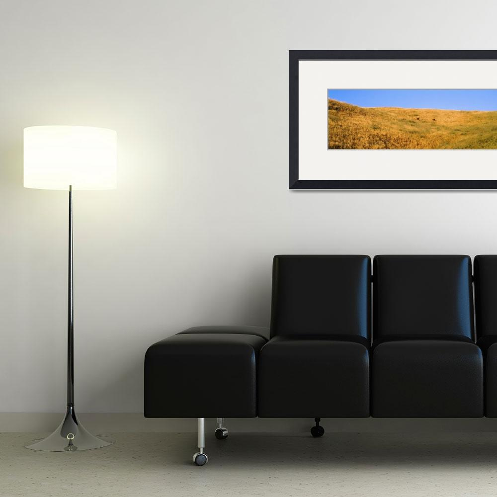 """Hillside w/Yellow Grass and Deer CA&quot  by Panoramic_Images"