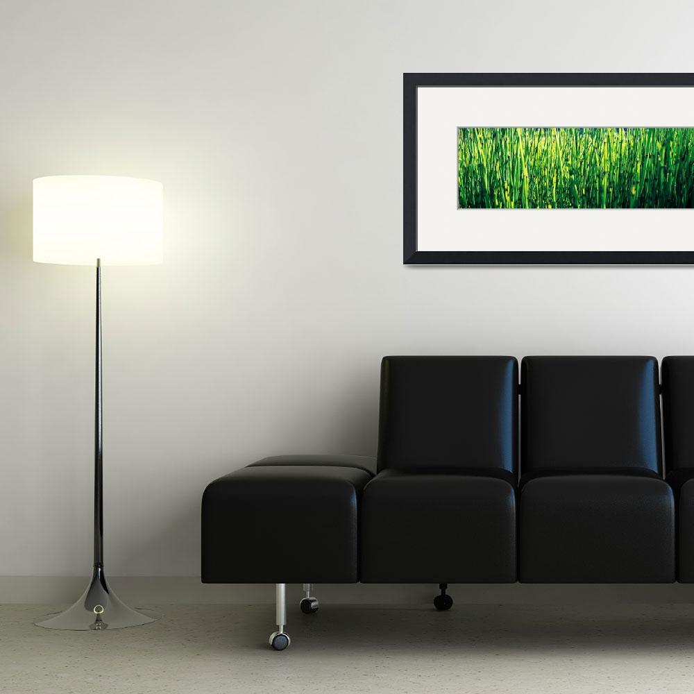 """Horsetail Grass Sacramento CA&quot  by Panoramic_Images"