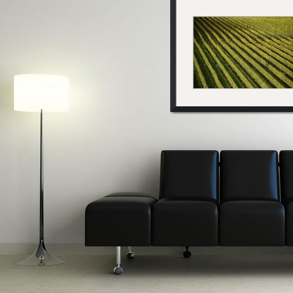"""Abstract Vineyard&quot  (2008) by overbeck"