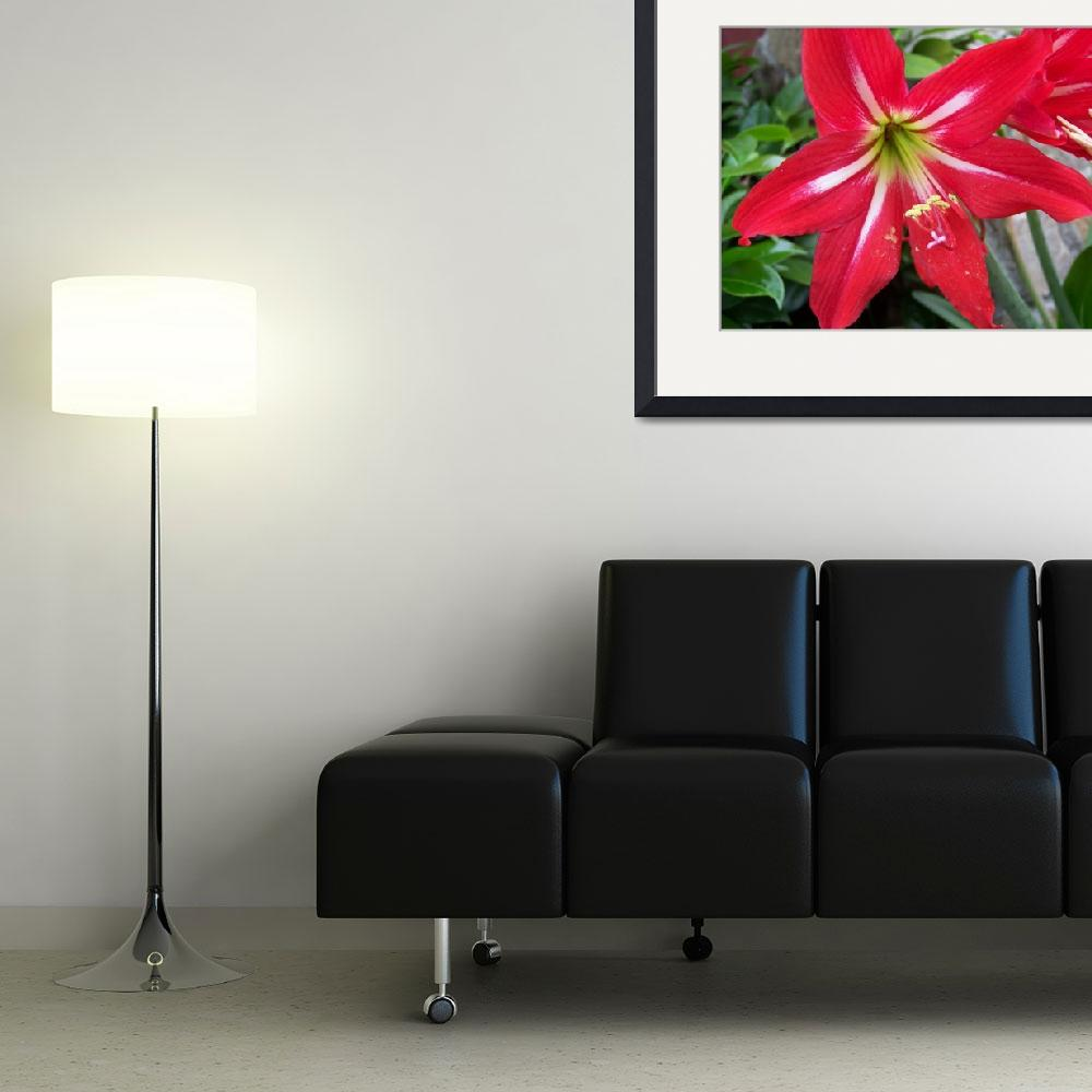 """big red flower 1&quot  (2009) by imagineit"