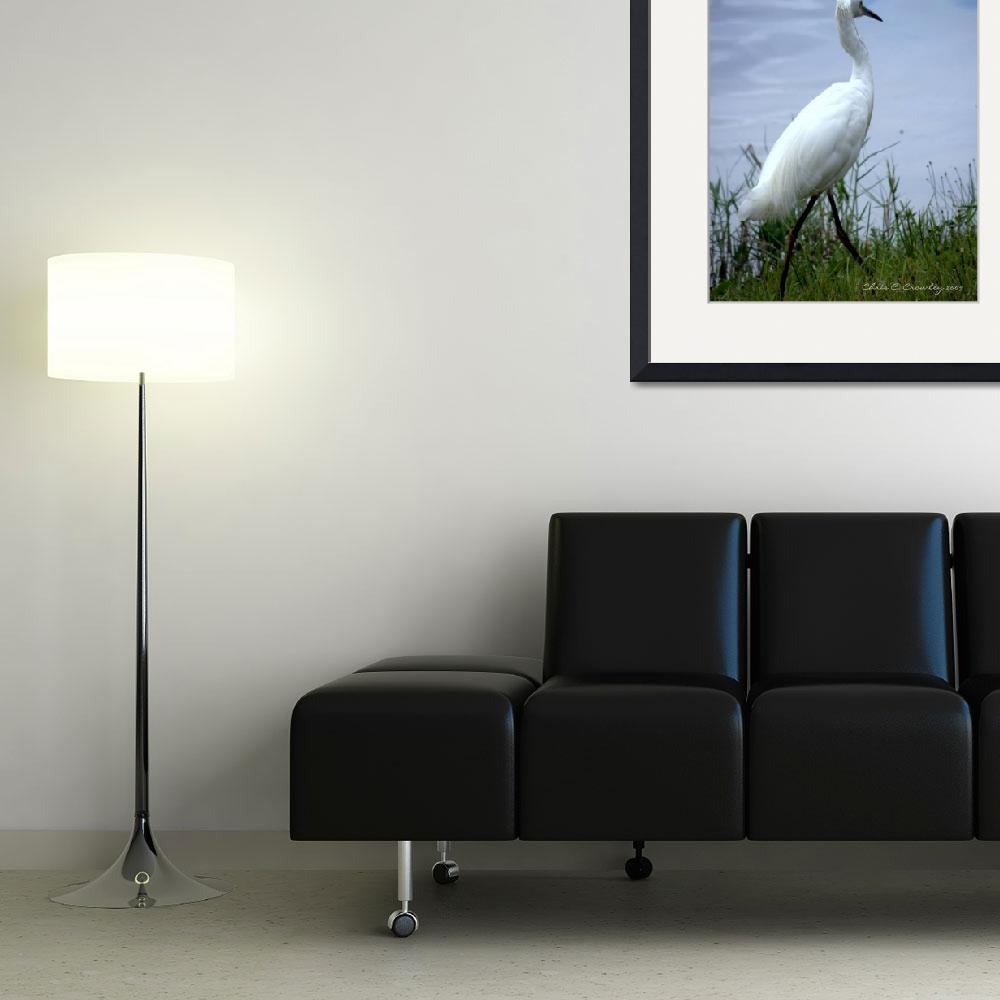 """An Egret Walks&quot  (2009) by ChrisCrowley"