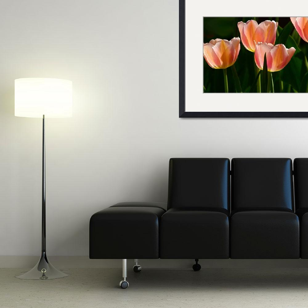 """Peaches and Cream Tulips&quot  (2010) by LightHeart"