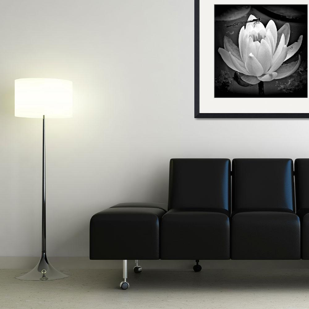 """Water Lily and Company&quot  (2010) by bavosiphotoart"