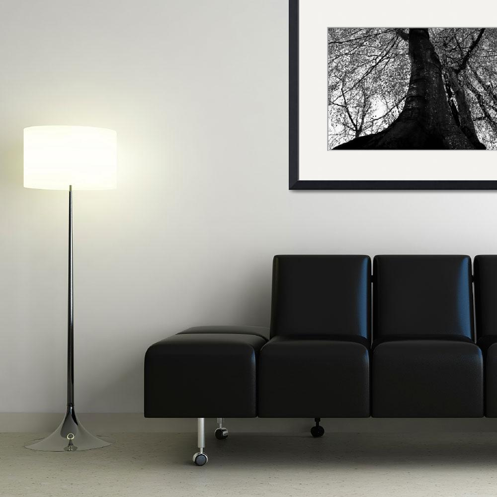 """black and white tree&quot  (2008) by jasheimages"