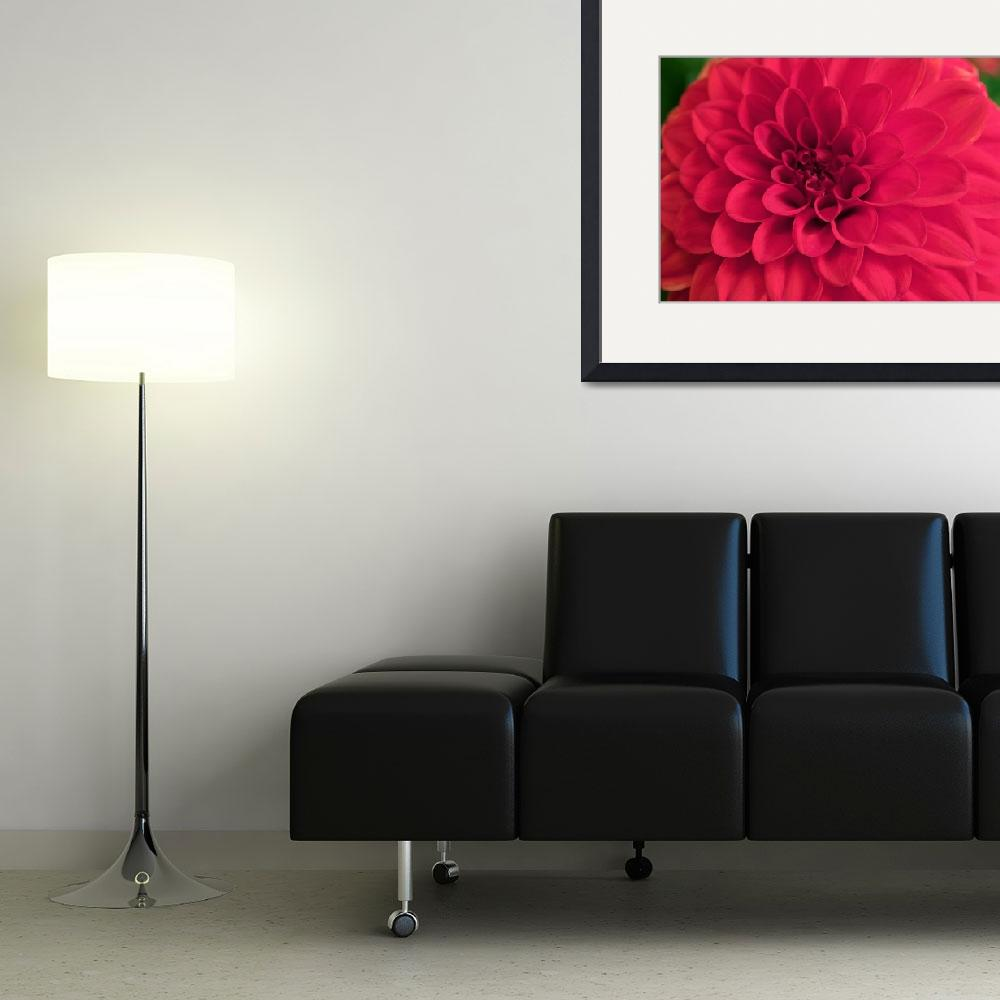 """Red Dahlia 1&quot  (2012) by twostarphotography"