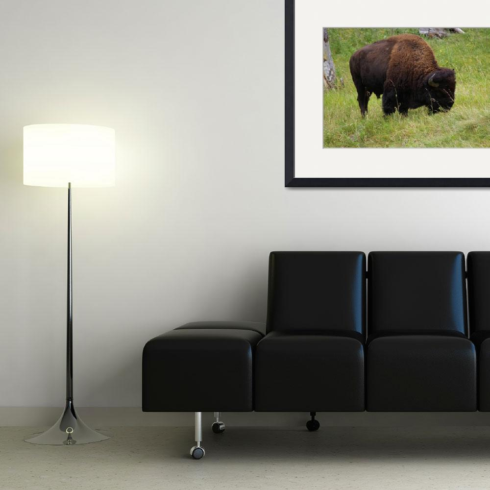 """Bison Feeding&quot  (2009) by pamelask"