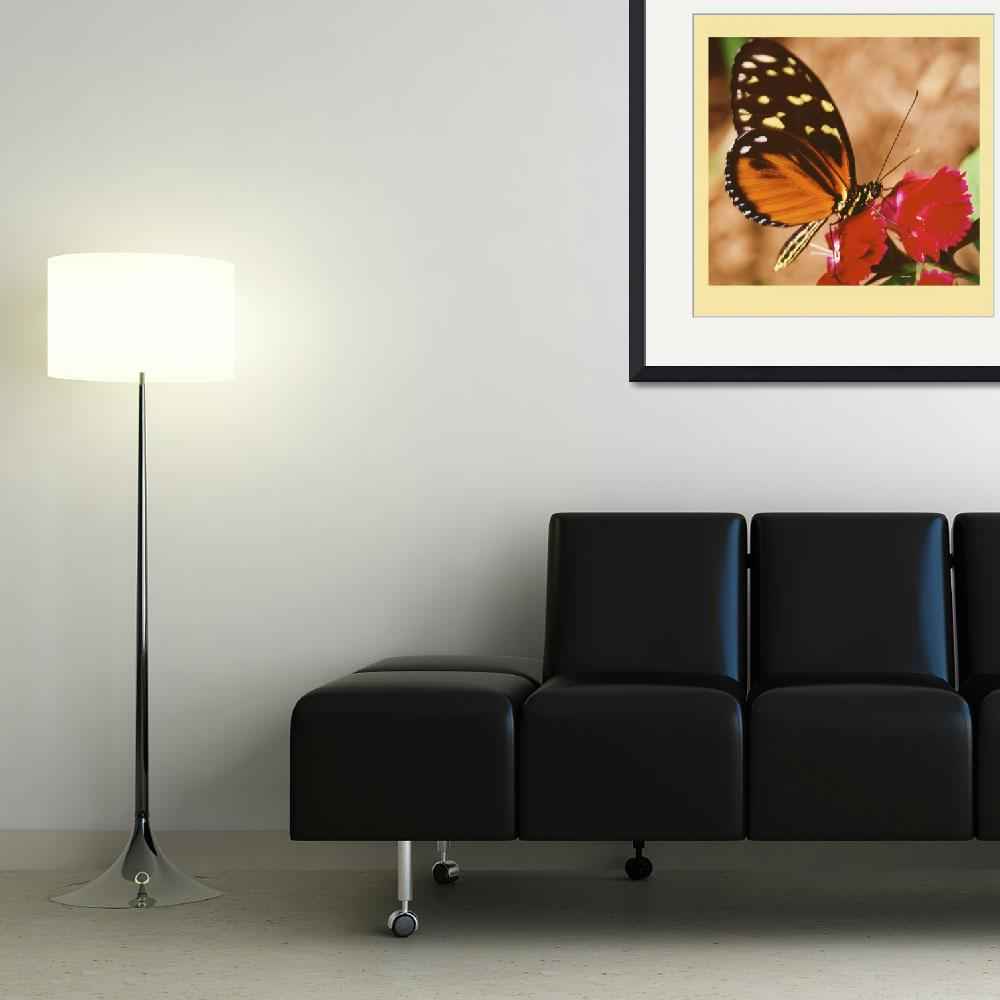 """North American butterfly&quot  (2007) by frankreggio"