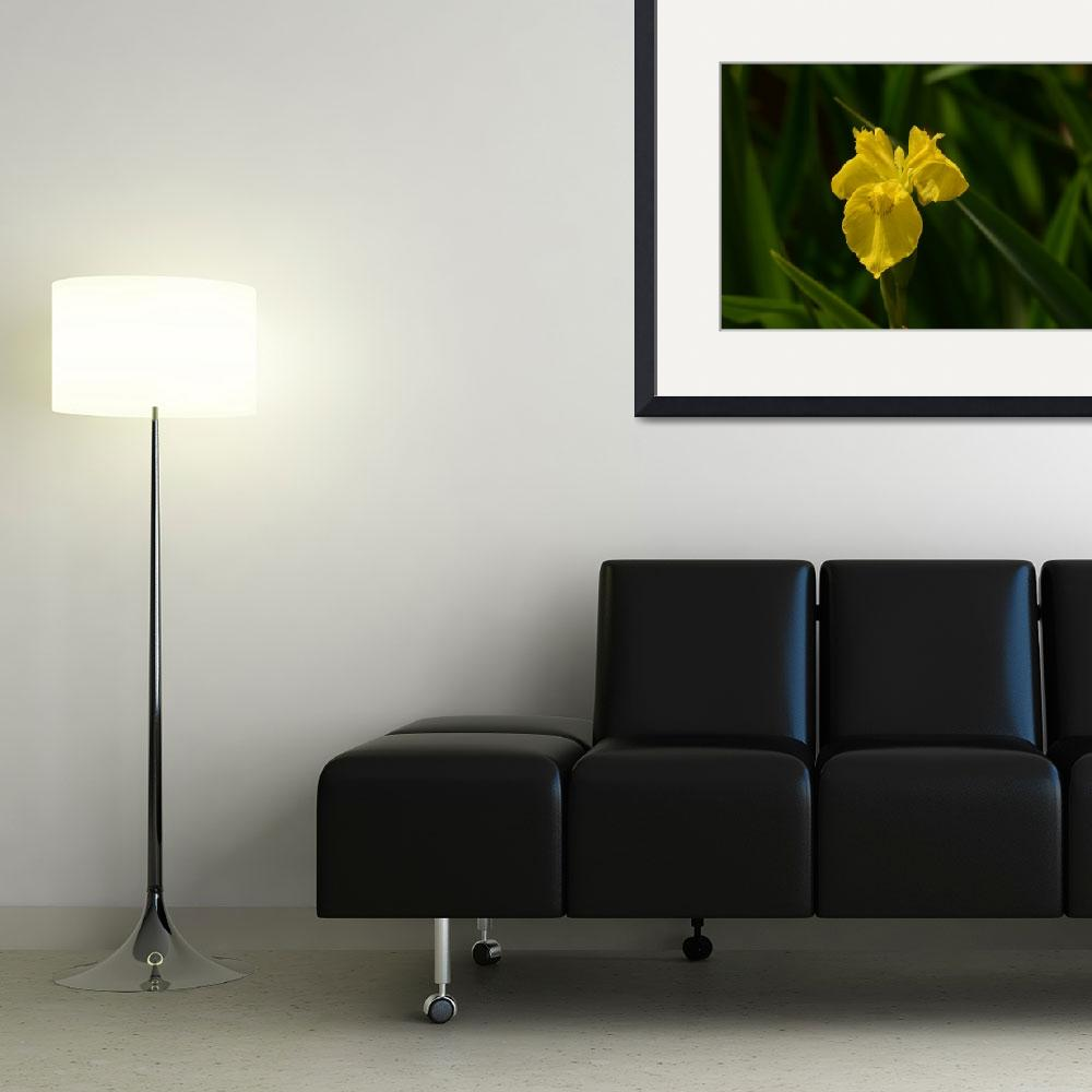 """Yellow Iris&quot  (2011) by mellting"