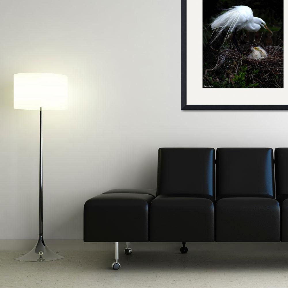 """Egret With Chicks&quot  (2009) by photonjon"