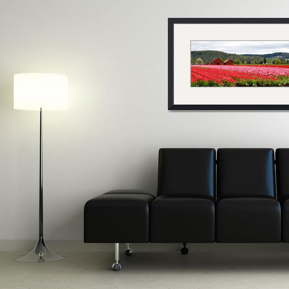 """Fields of Tulips #120428_015c1&quot  (2012) by anselprice"