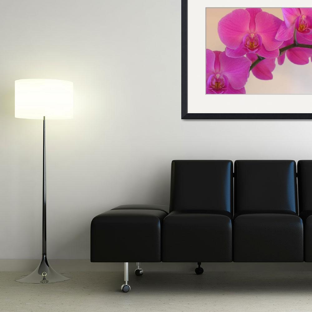 """Pink Orchid&quot  (2008) by SnapitNow"