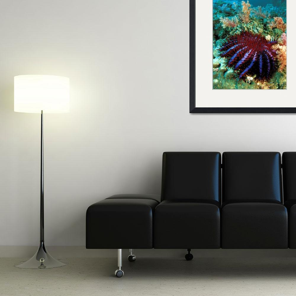 """Thailand, Reef Scene With Crown-Of-Thorns Starfish&quot  by DesignPics"