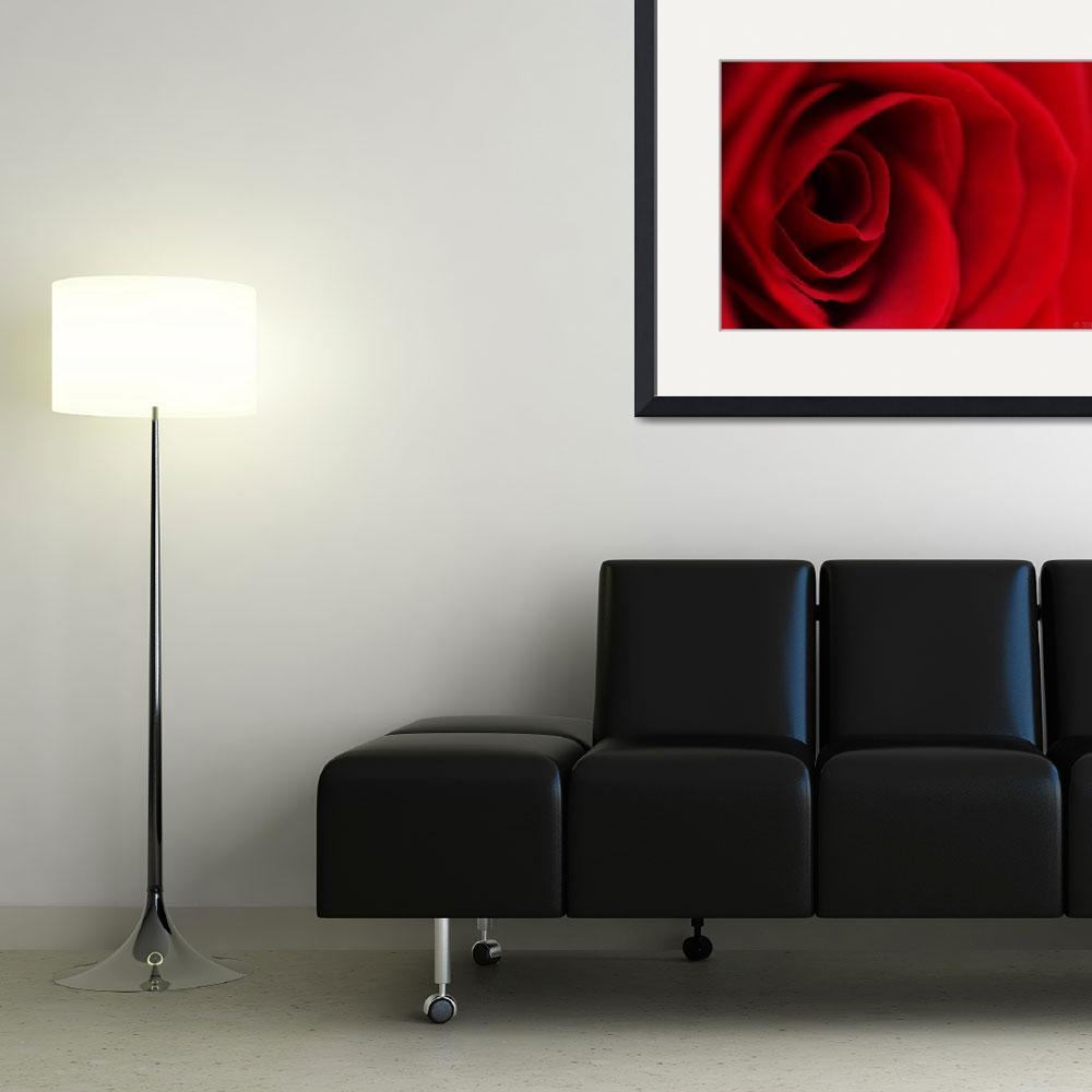 """Red Rose #2&quot  (2009) by Norah"