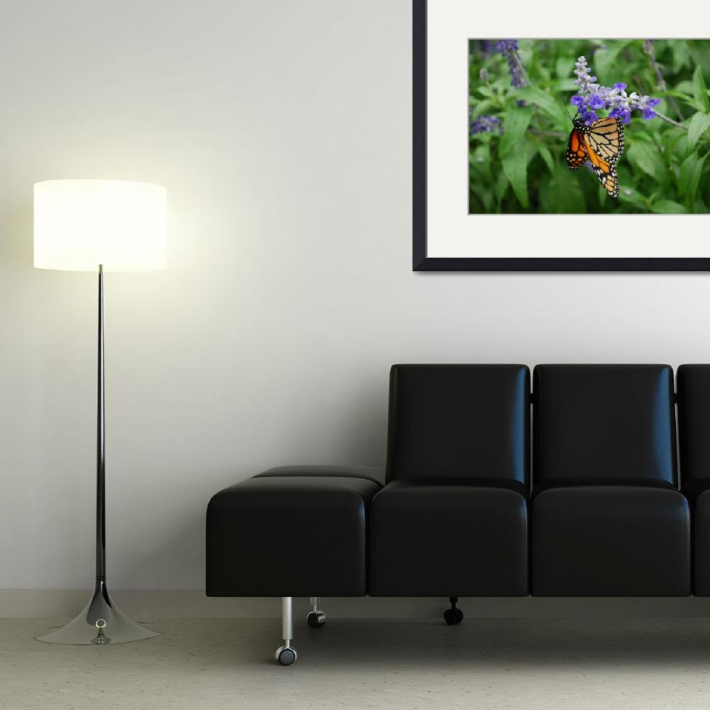 """Monarch Butterfly Suspended from Flower&quot  (2010) by panoramic"