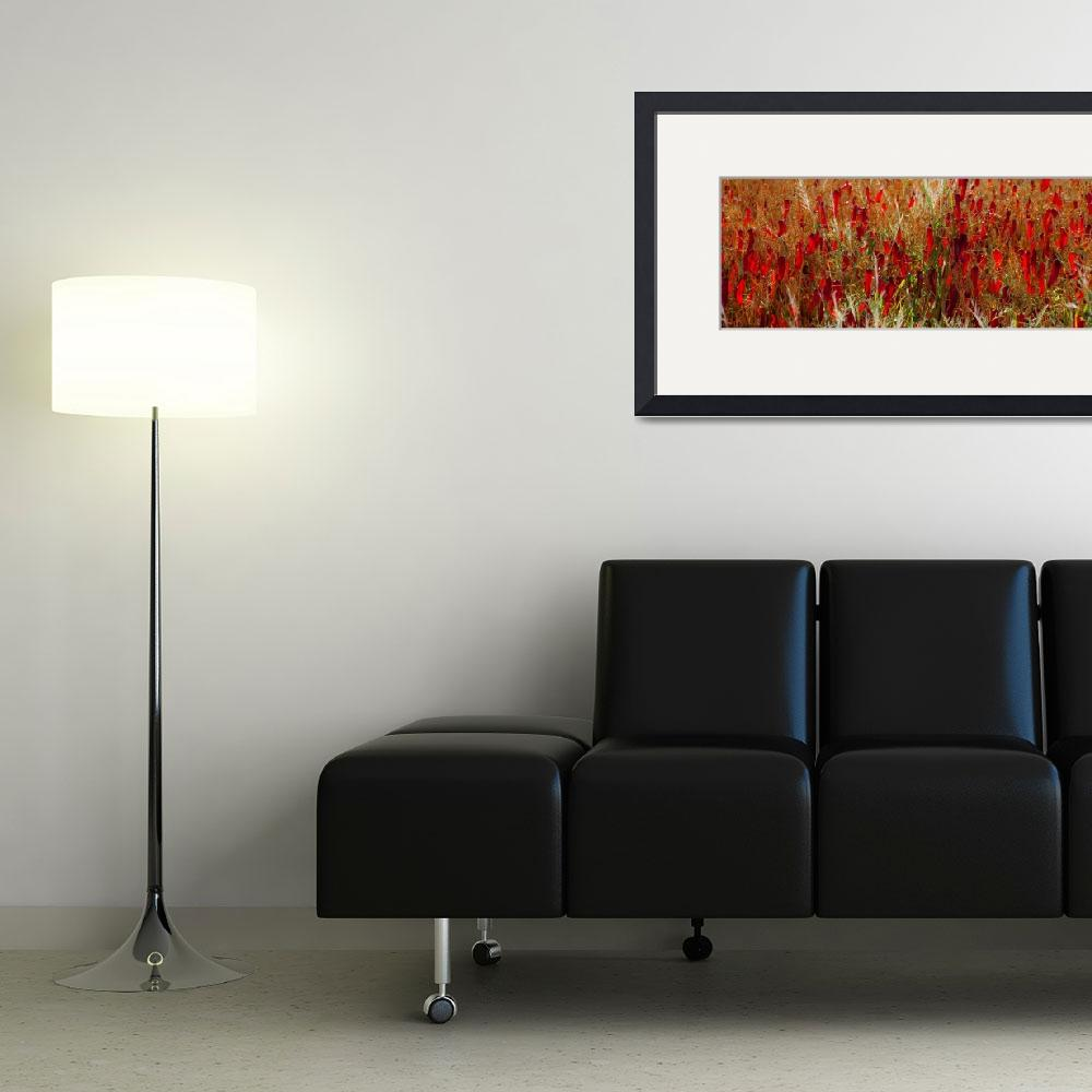 """Chili peppers - pano&quot  (2010) by pbycraftphotography"