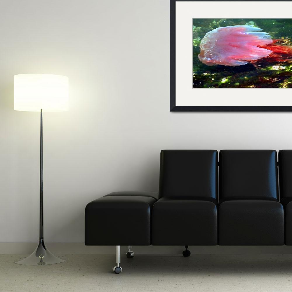"""Pink Proud Jelly Fish&quot  (2008) by shutterjunkie"