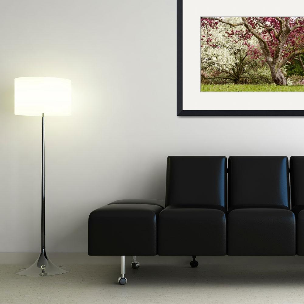 """Apple trees in bloom&quot  (2014) by joemamerphotography"