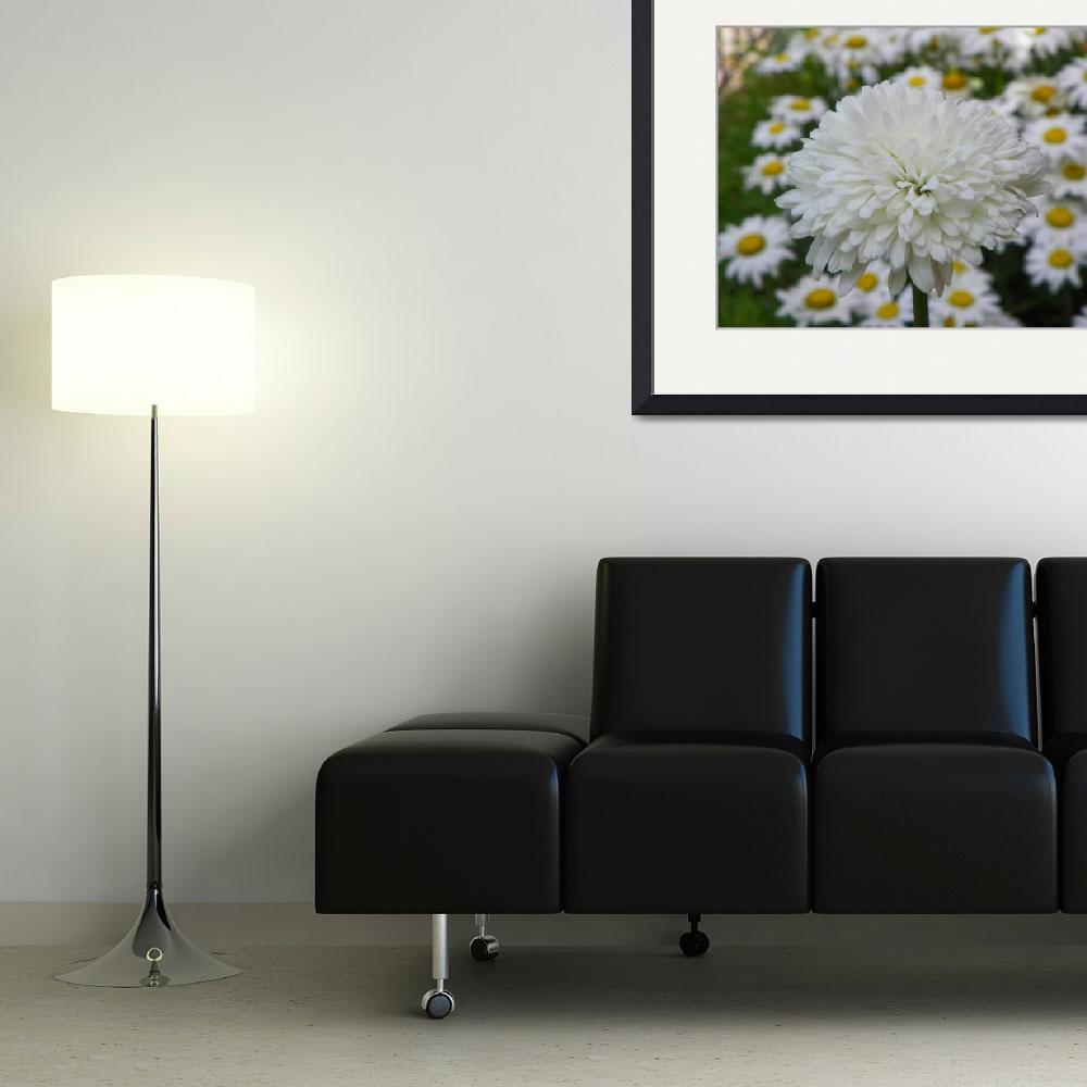 """Summer Snowball Leucanthemum superbum&quot  (2014) by vpicks"