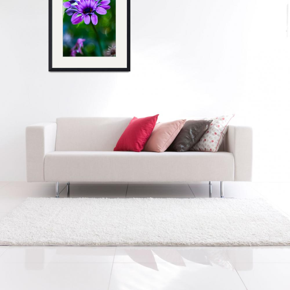 """Osteospermum Lavender Bliss&quot  (2010) by johncorney"