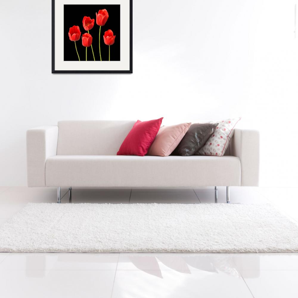 """Red Tulips Black Background Square Wall Art&quot  (2012) by NatalieKinnear"