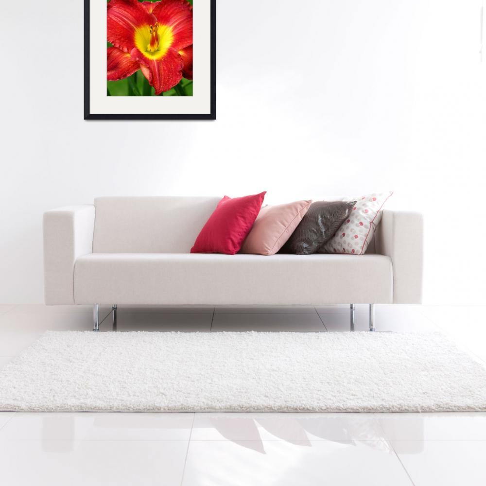 """Red & Yellow Daylily&quot  (2009) by mariehedtke"