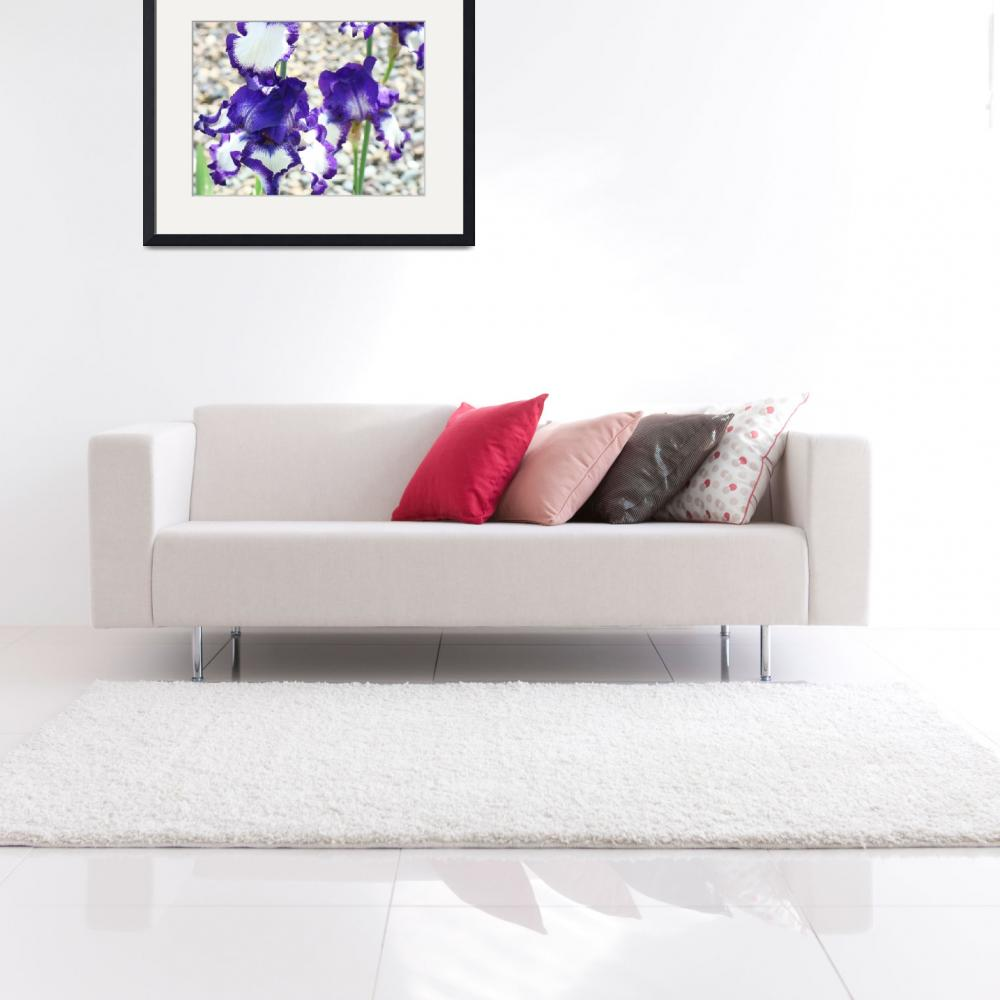 """Irises Purple White Iris Flowers Art Prints&quot  (2013) by BasleeTroutman"