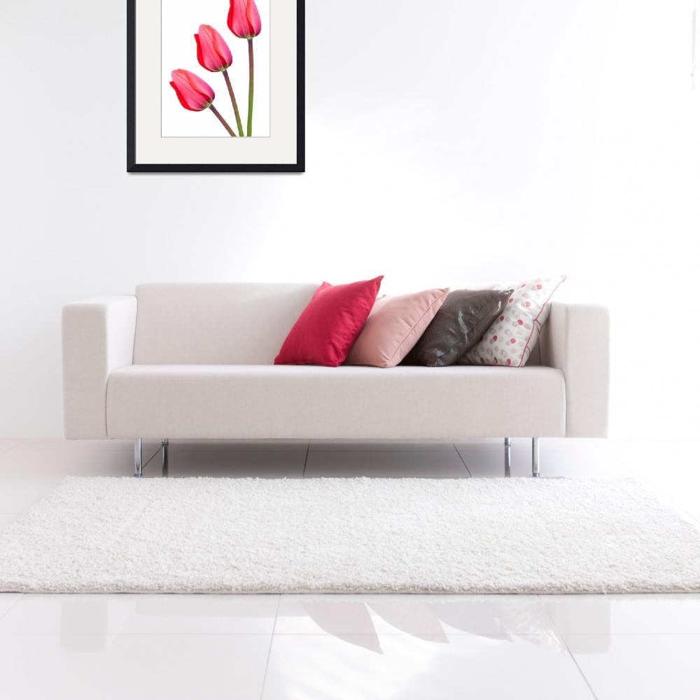 """Three Red Tulips&quot  by NatalieKinnear"