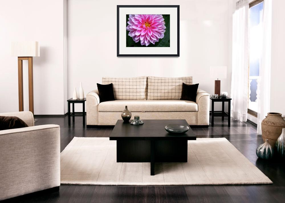 """Pink Dahlia in Full Bloom&quot  (2009) by kalabart"