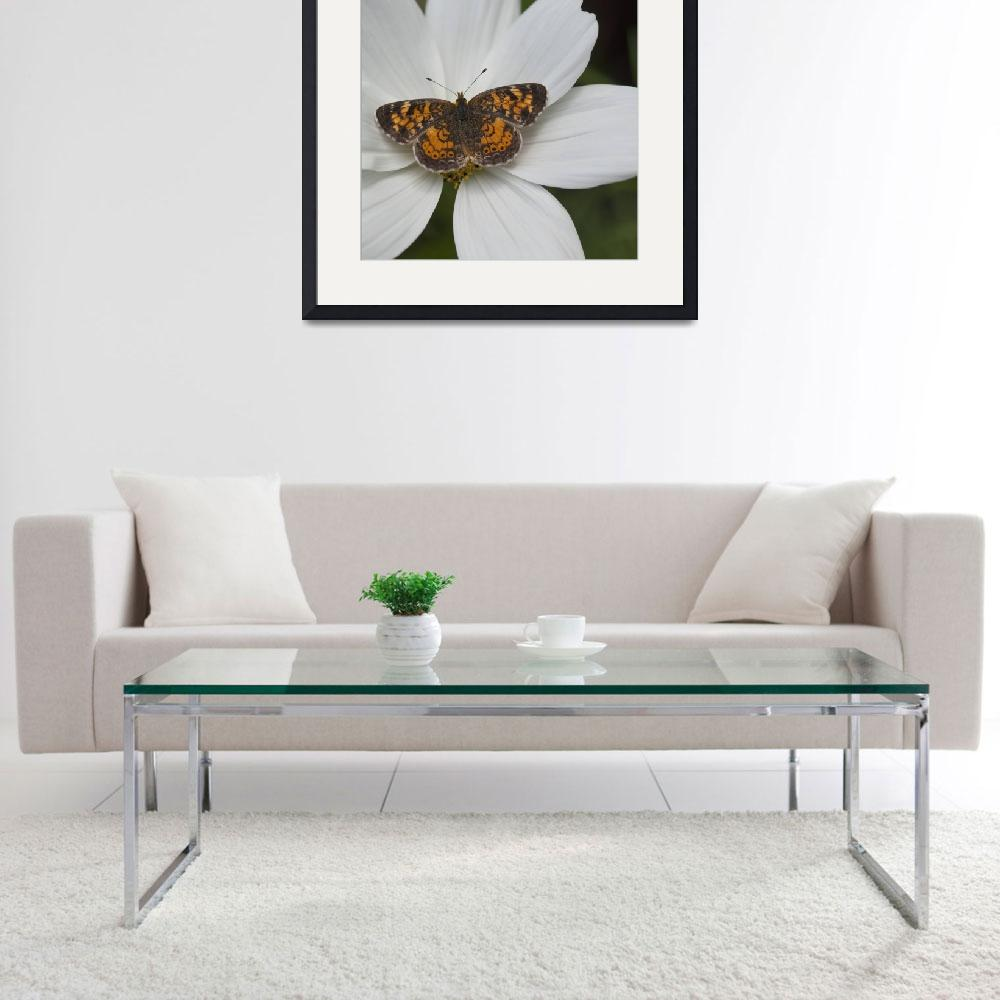 """Butterfly On White Flower&quot  by DesignPics"