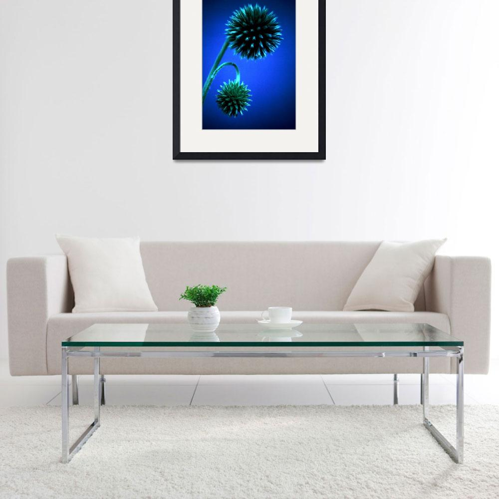 """Echinops in Blue&quot  (2006) by StevenRichards"