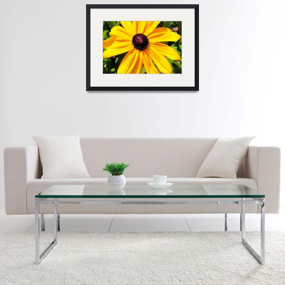 """Black Eyed Susan&quot  (2014) by patsphotos"