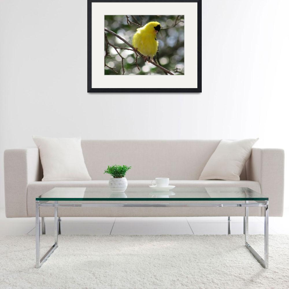"""Yellow American Goldfinch 2&quot  (2015) by AprilSkyPhotography"