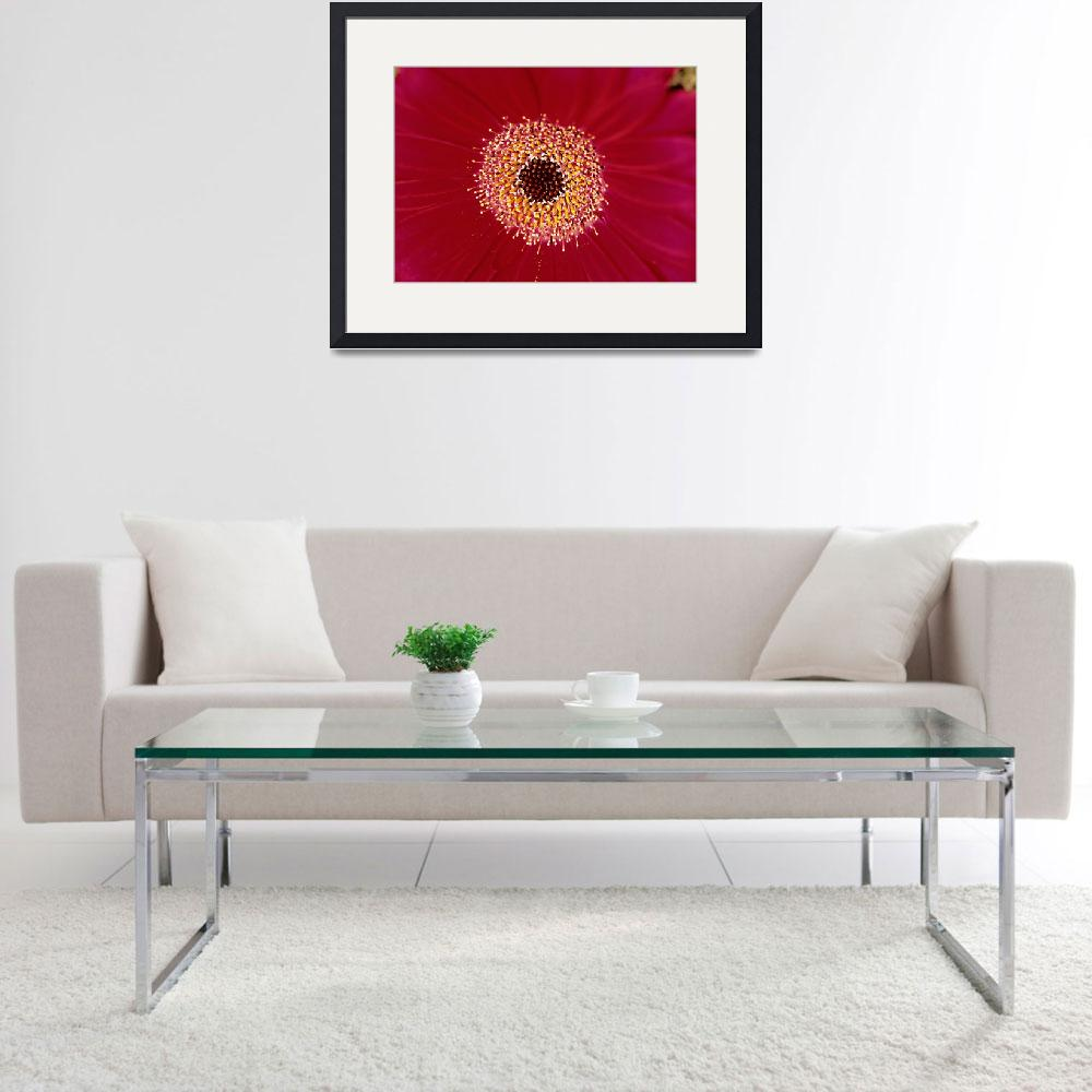 """Red Gerber Daisy Floral&quot  (2004) by kphotos"
