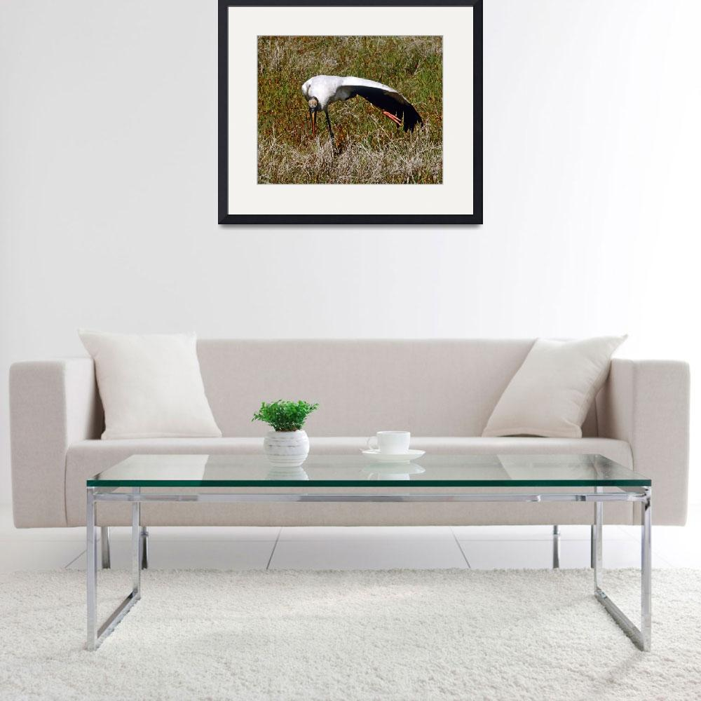 """Wood Stork Hunting&quot  (2005) by kphotos"