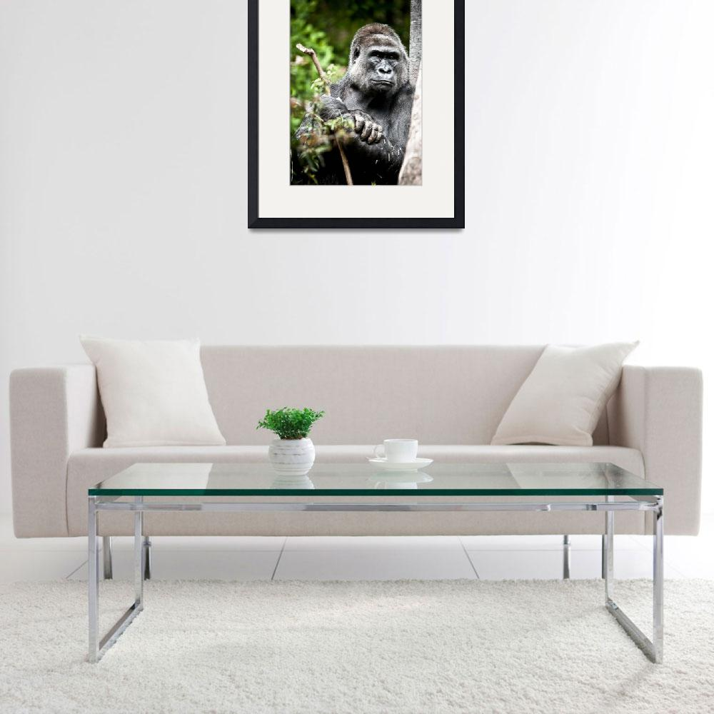 """Gorilla&quot  (2009) by paulasuterphoto"