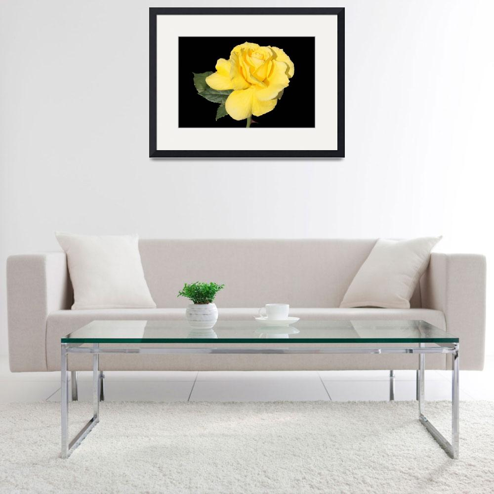 """Brillant Yellow Rose&quot  (2011) by kenrainwaterphotography"