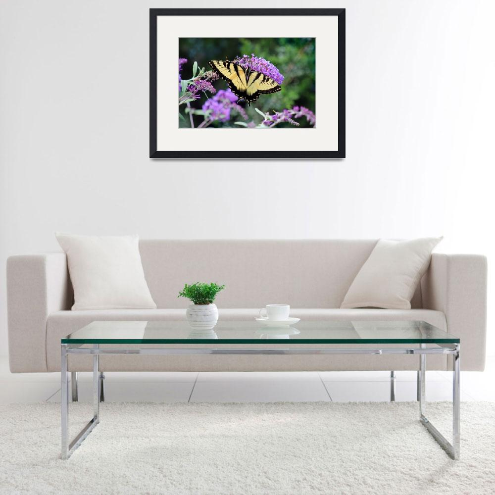 """Eastern Tiger Swallowtail Butterfly on Buddleia&quot  (2015) by KsWorldArt"