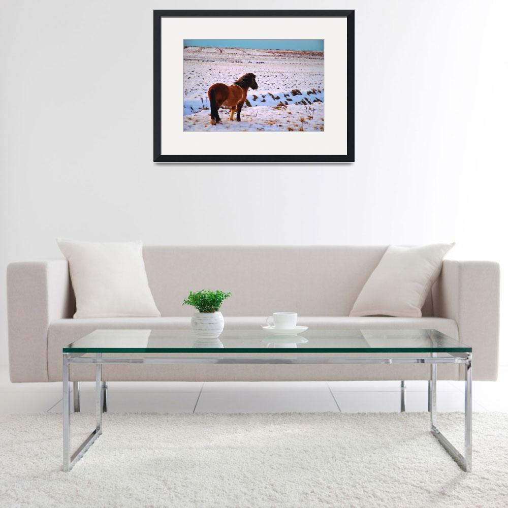 """Icelandic horse in field of snow&quot  (2013) by Karlita246"