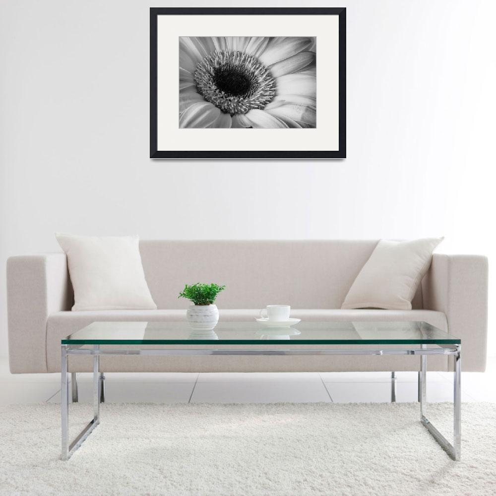 """Gerber Daisy 2&quot  (2010) by dkocherhans"
