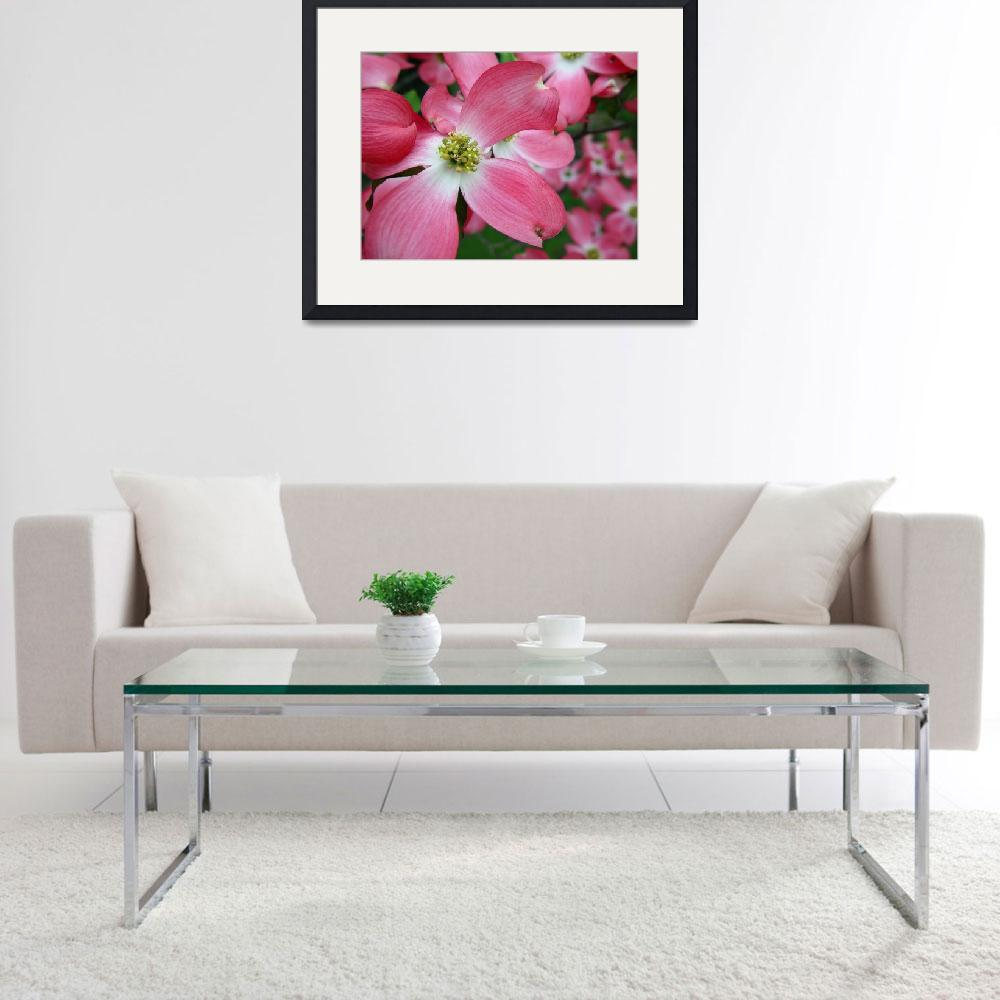 """Pink Dogwood Blossoms - Horizontal&quot  (2006) by mindseyecreative"
