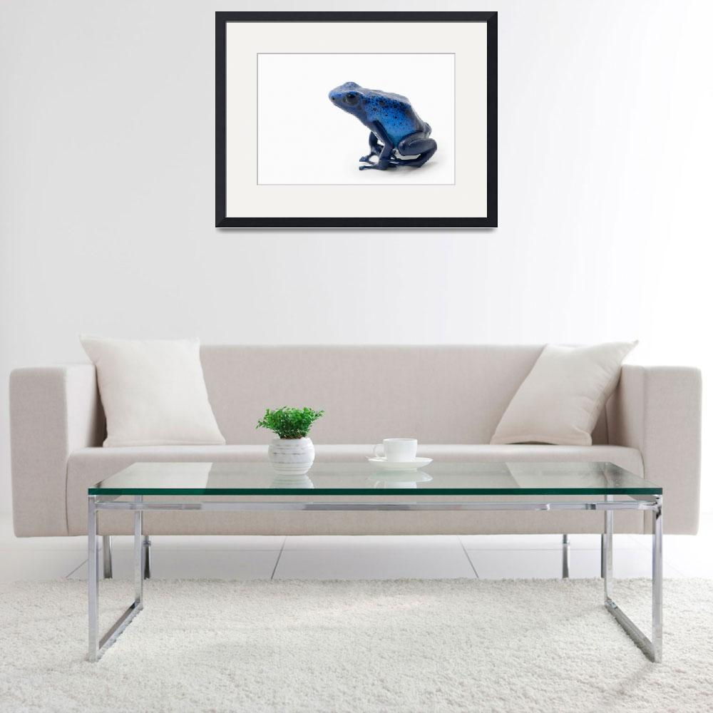 """Blue Poison Dart Frog&quot  by DesignPics"