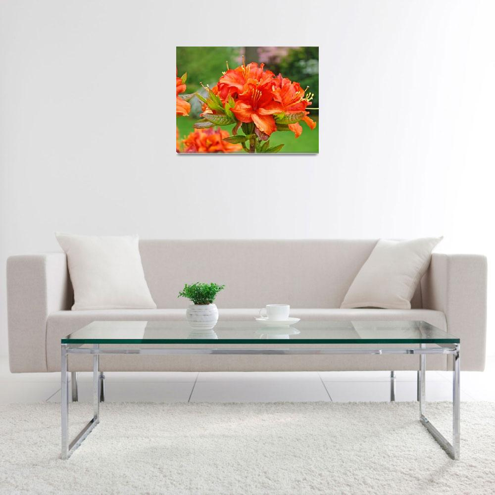 """Azaleas Orange Azalea Flowers Art Rhododendrums&quot  (2009) by BasleeTroutman"