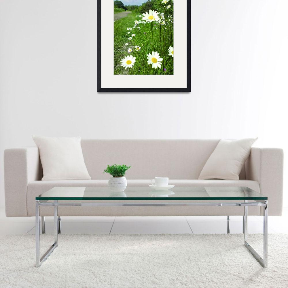 """daisies in perspective&quot  (2008) by clairebrocklesby"