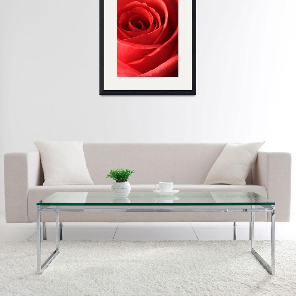 """Romantic Red Rose&quot  by NatalieKinnear"