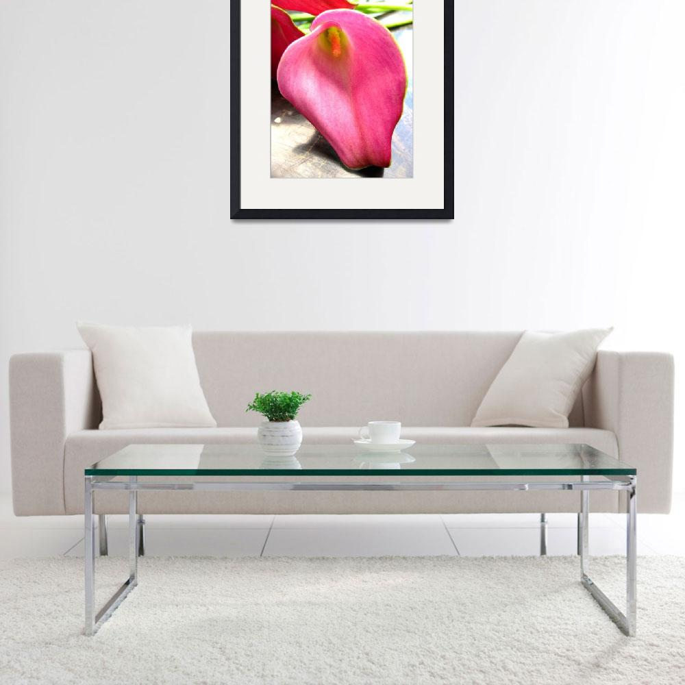 """pink calla.jpg&quot  (2008) by amira"