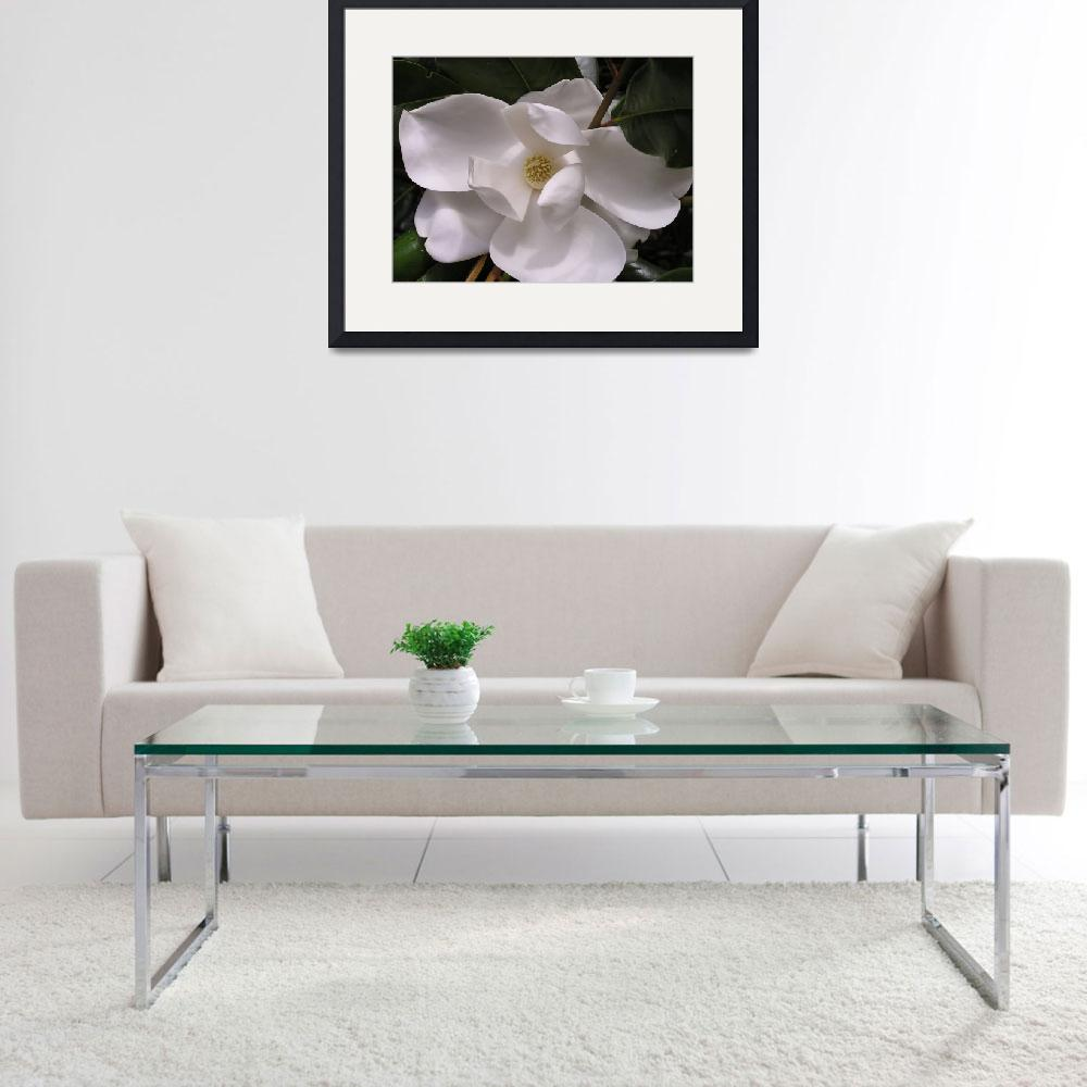 """White Magnolia&quot  (2006) by bettymackey"