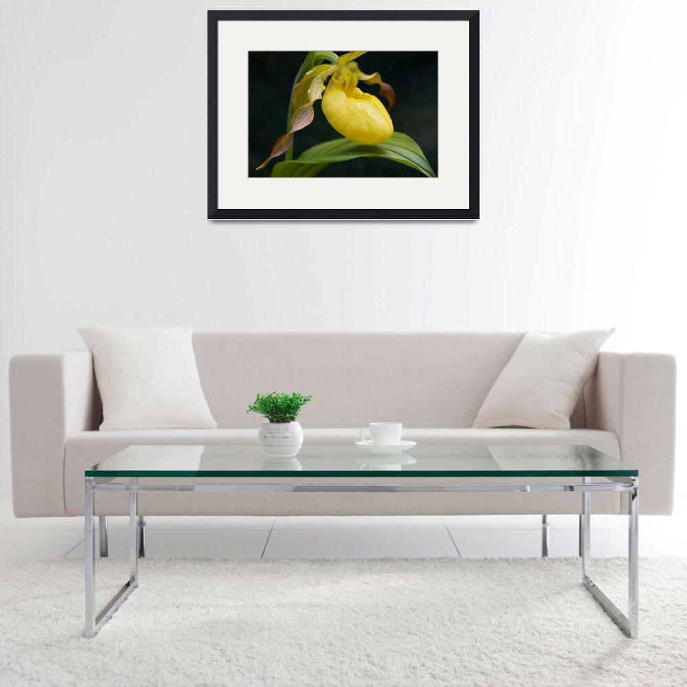 """Yellow Lady Slipper&quot  (2010) by mindseyecreative"