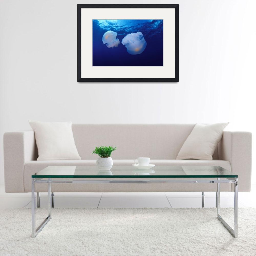 """Marshall Islands, Kwajalein Atoll, Pair Of Jellyfi&quot  by DesignPics"
