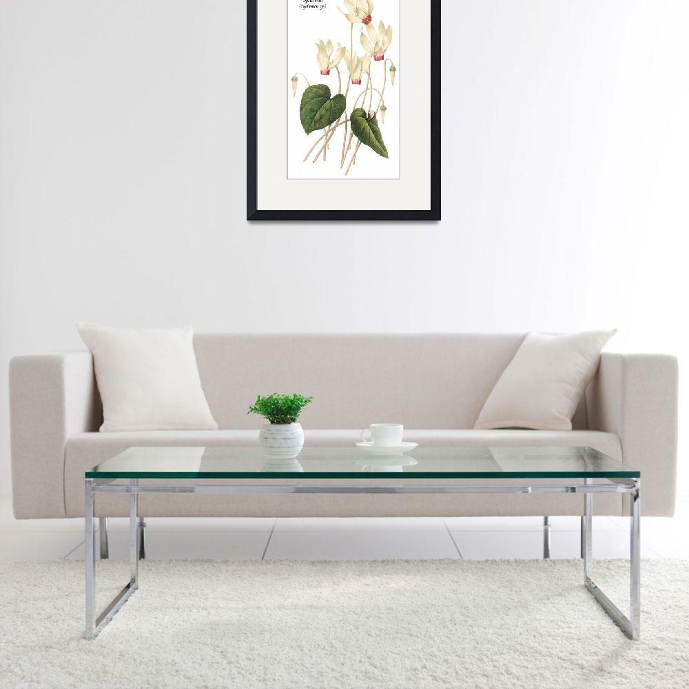 """Cyclamen (Cyclamen sp.) Botanical Art&quot  by ArtLoversOnline"